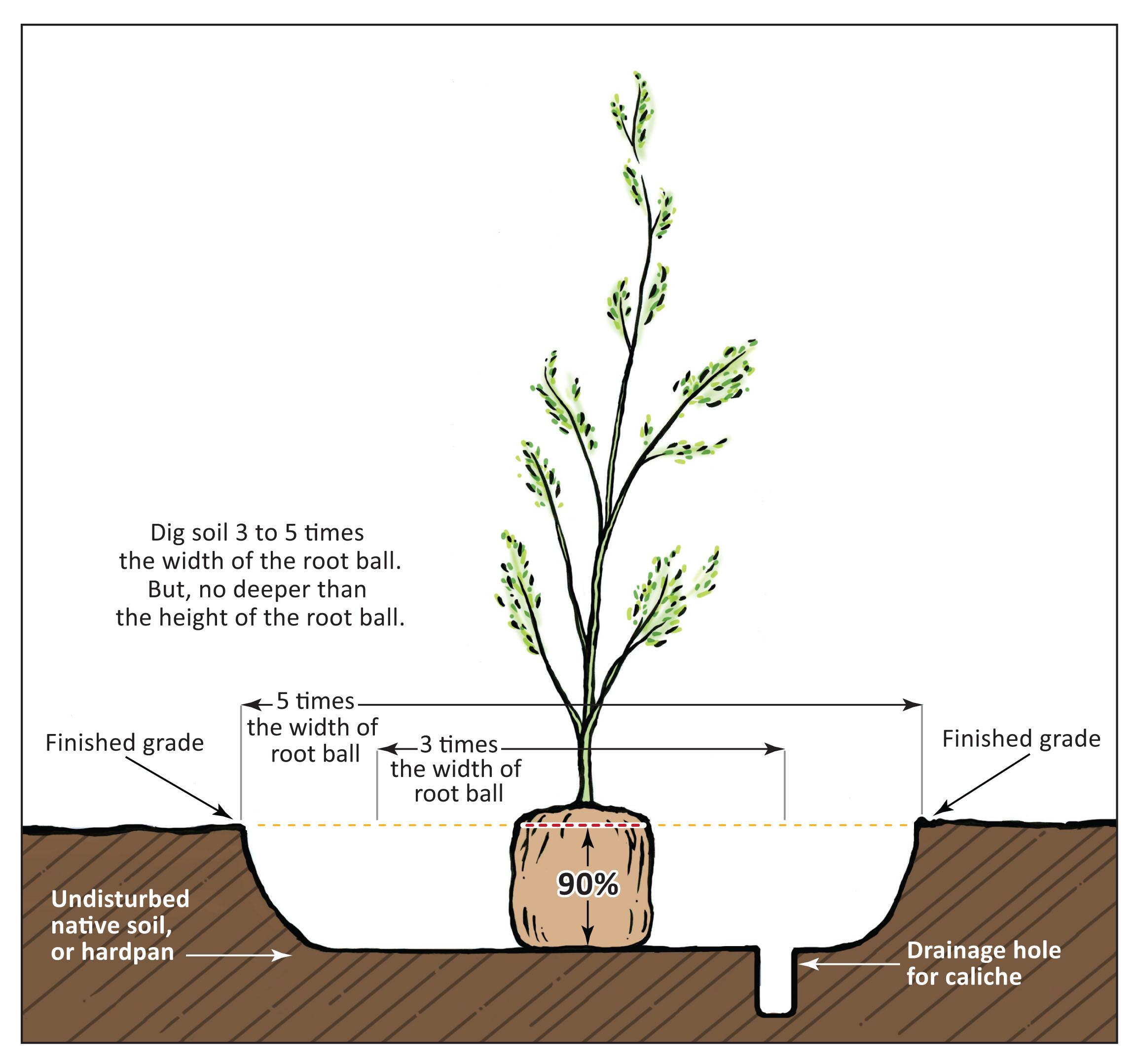 SRP-TreesMatter_planting